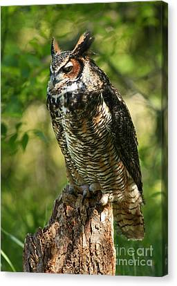 Sleepy Time In The Forest Great Horned Owl  Canvas Print by Inspired Nature Photography Fine Art Photography