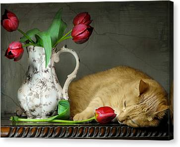 Sleepy Tulips Canvas Print by Diana Angstadt