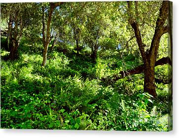 Canvas Print featuring the photograph Sleepy Valley Oaks by Gary Brandes