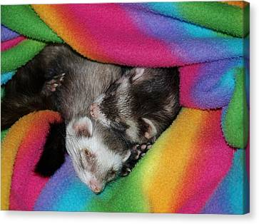 Sleepy Weezles Canvas Print