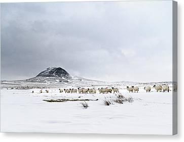 Slemish Mountain In Winter Northern Ireland Canvas Print by Przemyslaw Zdrojewski