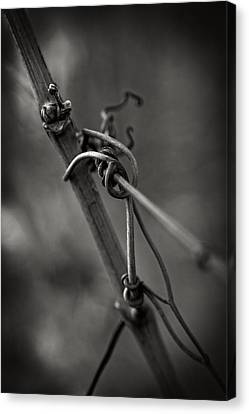 Canvas Print featuring the photograph Slender by Russell Styles