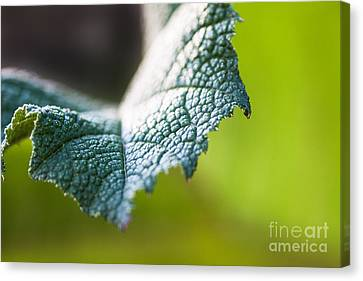 Slice Of Leaf Canvas Print by John Wadleigh