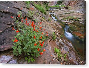 Slippery Slope Canvas Print by Peter Coskun