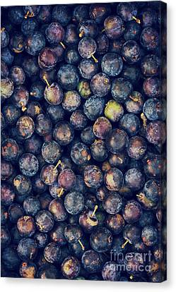 Loom Canvas Print - Sloes by Tim Gainey
