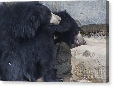 Sloth Bear Canvas Print by Twenty Two North Photography