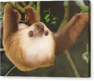 Sloth In A Tree Canvas Print by Peter Hartog