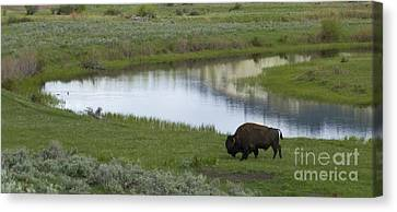 Slough Creek   #4111 Canvas Print by J L Woody Wooden