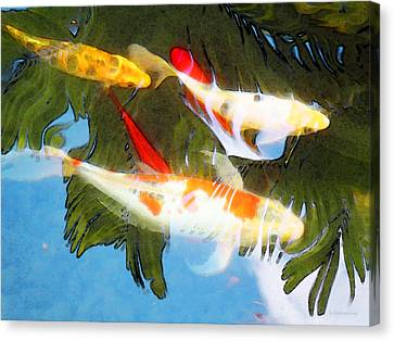 Slow Drift - Colorful Koi Fish Canvas Print by Sharon Cummings