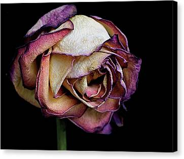 Slow Fade Canvas Print by Rona Black