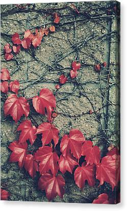 Slowly Dying Canvas Print by Laurie Search