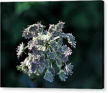 Canvas Print featuring the photograph Small Flowers Makes One Big by Leif Sohlman