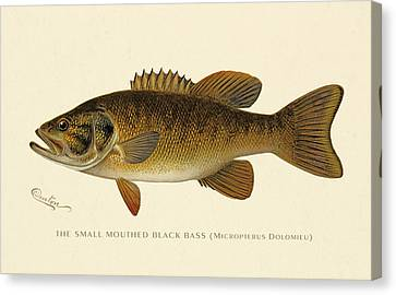 Small Mouthed Black Bass Canvas Print by Gary Grayson