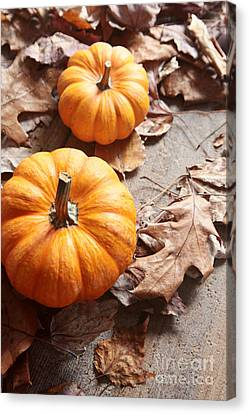 Canvas Print featuring the photograph Small Pumpkins On Fall Leaves by Sandra Cunningham