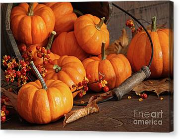 Small Pumpkins With Wood Bucket  Canvas Print by Sandra Cunningham