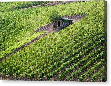 Pastoral Vineyard Canvas Print - Small Rock Shed In The Vineyards by Terry Eggers