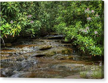 Small Stream In West Virginia With Mountain Laurel Canvas Print by Dan Friend
