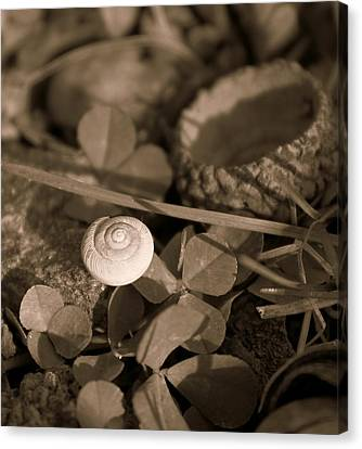 Canvas Print featuring the photograph Small Things Matter by Candice Trimble