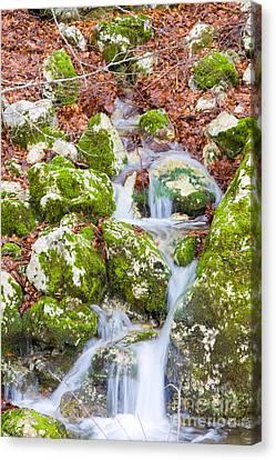 Small Waterfall Canvas Print by Gabriela Insuratelu