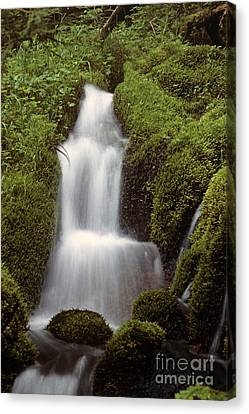 Small Waterfall In Forest Setting  Canvas Print
