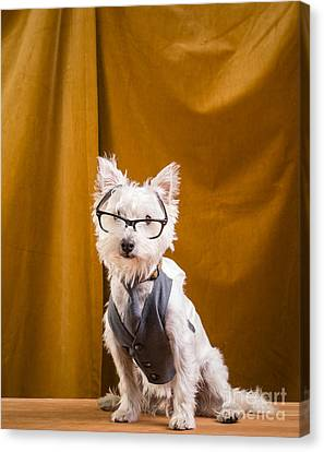 Small White Dog Wearing Glasses And Vest Canvas Print by Edward Fielding
