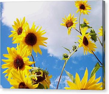 Canvas Print featuring the photograph Smile Down On Me by Mary Wolf