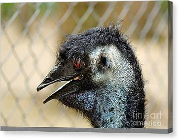 Smiley Face Emu Canvas Print by Kaye Menner