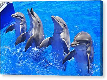 Smiling Dolphins Canvas Print
