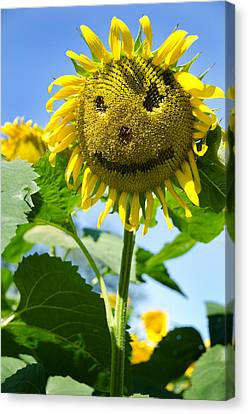 Smiling Sunflower Canvas Print by Donna Doherty