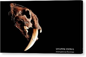 Smilodon Fatalis Skull 3 Canvas Print