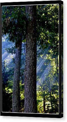 Smoke Through The Trees Canvas Print