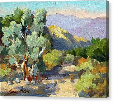 Smoke Trees At Thousand Palms Canvas Print by Diane McClary