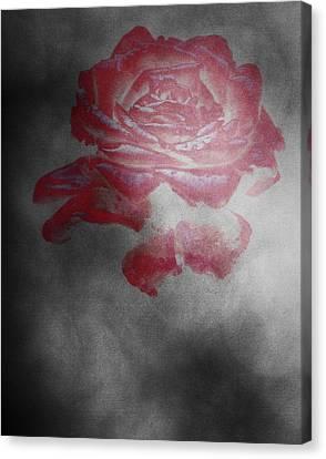 Smokey Rose Canvas Print
