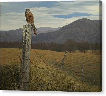 Smoky Mountain Hunter-american Kestrel Canvas Print by James Willoughby III