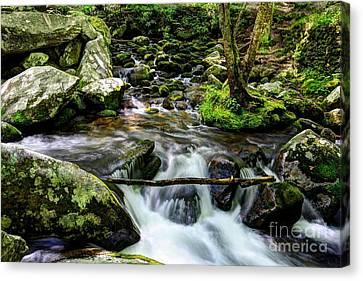 Smoky Mountain Stream 4 Canvas Print by Mel Steinhauer