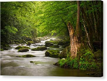 Dave Allen Canvas Print - Smoky Mountains Solitude - Great Smoky Mountains National Park by Dave Allen