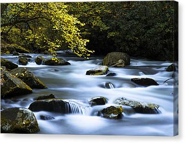 Smoky Stream Canvas Print by Chad Dutson