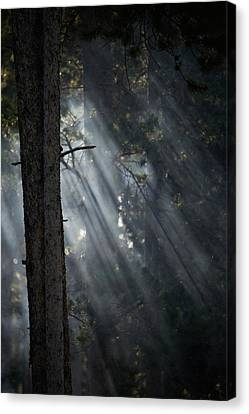 Smoky Sunlight Filtering Canvas Print by Nick Dale