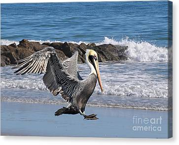Smooth Landing Canvas Print by Kathy Baccari