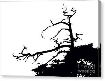 Snag Canvas Print by Russell Christie