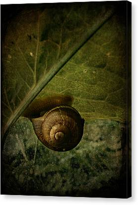 Snail Camp Canvas Print by Barbara Orenya
