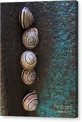 Terrestrial Canvas Print - Snail Colony by Heiko Koehrer-Wagner