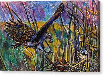 Snail Kite Canvas Print by Kendall Kessler