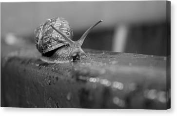 Canvas Print featuring the photograph Snail by Lora Lee Chapman