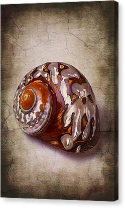 Nature Study Canvas Print - Snail Sea Shell 3 by Garry Gay