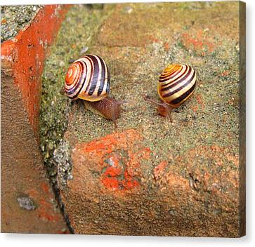 Canvas Print featuring the photograph Snail Snail The Gangs All Here by Mary Bedy