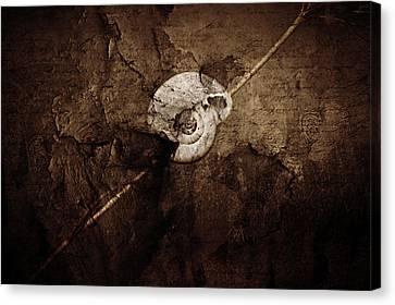Summer Light Canvas Print - Snail Still Life by Heike Hultsch