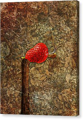 Snail Story - S01-03a Canvas Print by Variance Collections