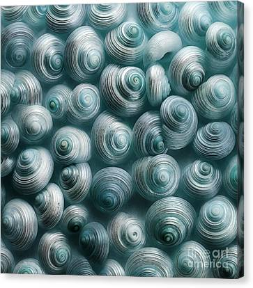 Snails Cyan Canvas Print