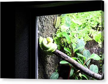 Snake - National Aquarium In Baltimore Md - 12123 Canvas Print by DC Photographer